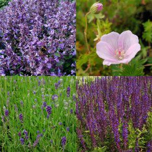 12 Pflanzen (Rosen-Begleiter) Mix