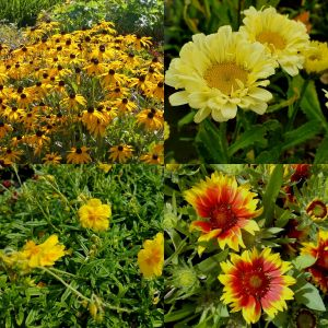 14 Pflanzen (Garten in Gelb) Mix