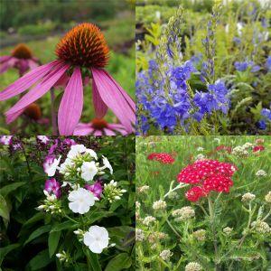 14 Pflanzen (Nektar für Schmetterlinge) Mix