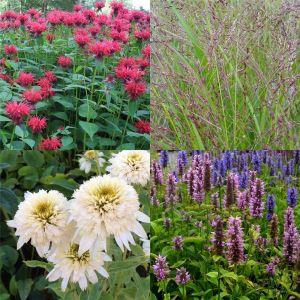 15 Pflanzen (Bunter Mix mit winterharten Dauerblühern mit PFLANZPLAN) Mix