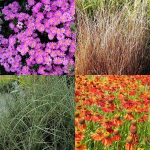 15 Pflanzen (Indian Summer mit Gräsern mit PFLANZPLAN) Mix