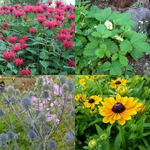 16 Pflanzen (Blumen für Kinder) Mix