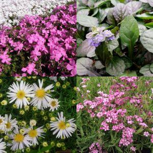 18 Pflanzen (Schnellwüchsige Bodendecker) Mix