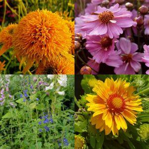 5 Pflanzen (farbkräftige Kübel-Pflanzen - ideal für Balkon und Terrasse) Mix