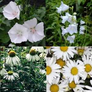 14 Pflanzen (Garten in Weiß) Mix