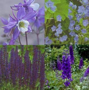 14 Pflanzen (Garten in Blau) Mix
