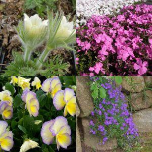 5 Pflanzen (Frühlingsblüher) Mix