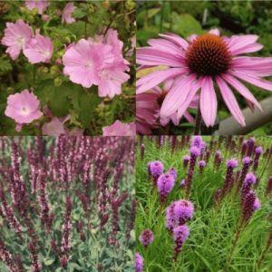 14 Pflanzen (Garten in Rosa) Mix