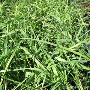 Hängender Bambus (Bamboo) Green Twist