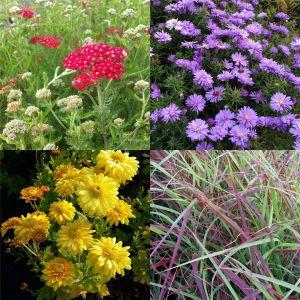 7 Pflanzen (Indian Summer – Farbpracht im Herbst) Mix