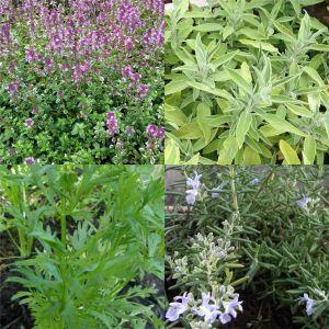5 Pflanzen (Kräuter für den Balkon) Mix