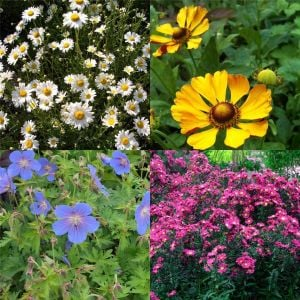 10 Vierländer Pflanzen (Bunter hohe Beetstauden) Mix