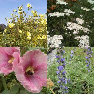 14 Pflanzen (Futter für Wildbienen) Mix