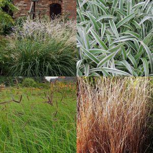 7 Pflanzen (Ziergras / Gräser M2) Mix