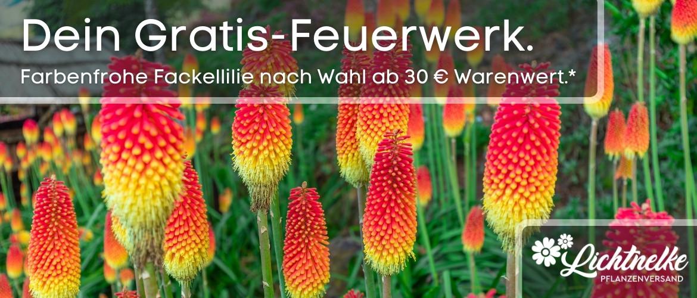 Feuerwerk Daheim