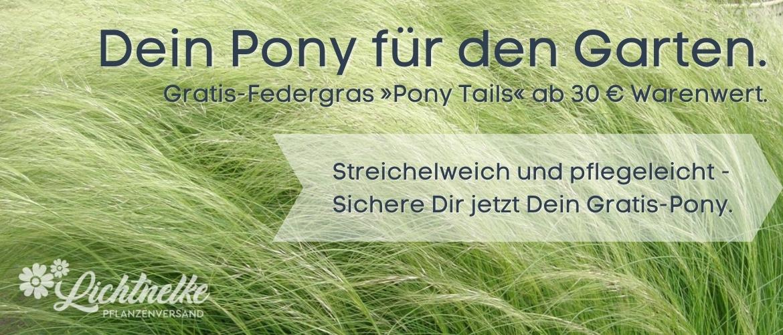 Dein Pony für den Garten