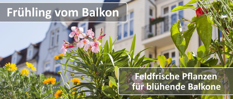 Frühling vom Balkon