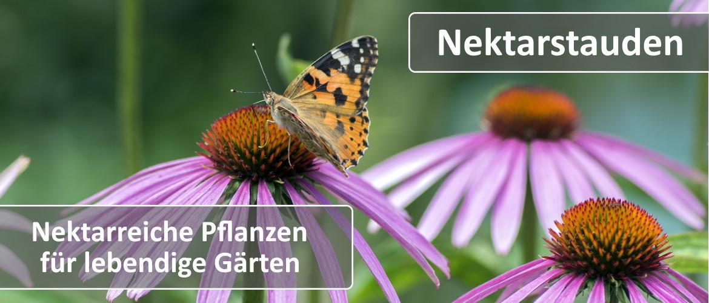 Nektarpflanzen